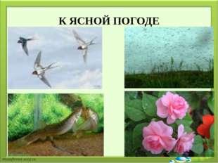 К ЯСНОЙ ПОГОДЕ