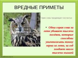 ВРЕДНЫЕ ПРИМЕТЫ Крик совы предвещает несчастье Одна серая сова за лето убивае