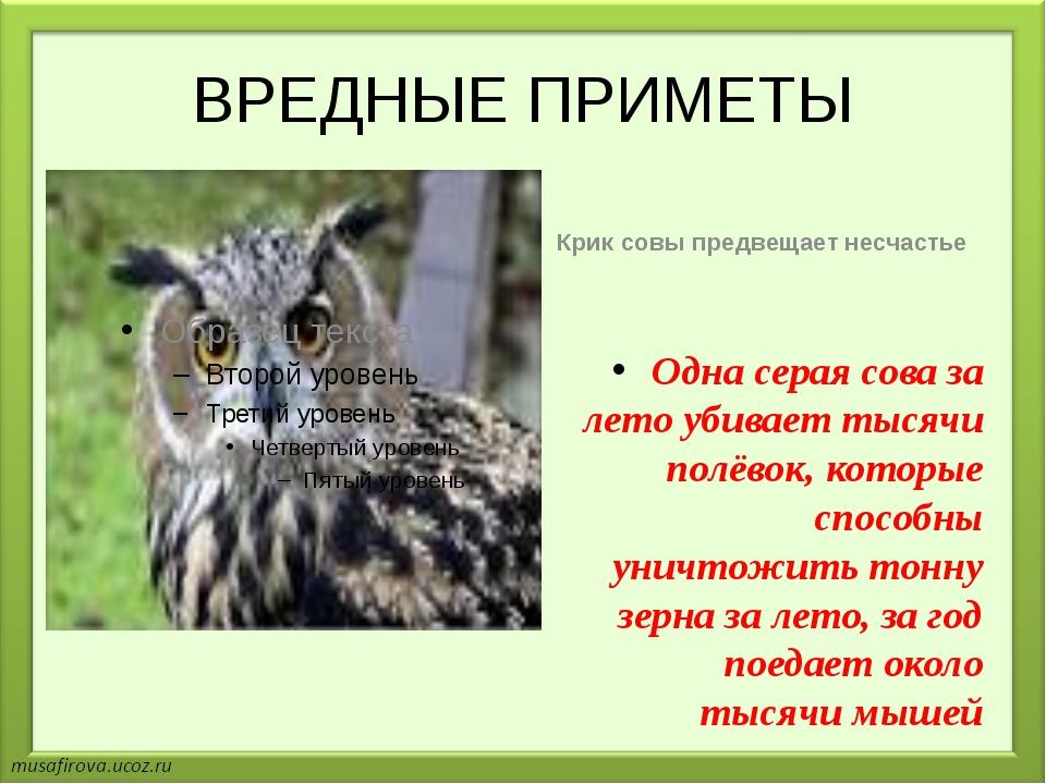 ВРЕДНЫЕ ПРИМЕТЫ Крик совы предвещает несчастье Одна серая сова за лето убивае...