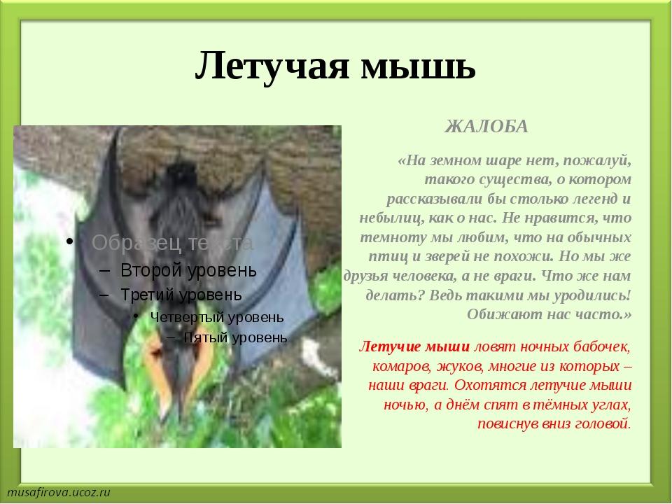 Летучая мышь ЖАЛОБА «На земном шаре нет, пожалуй, такого существа, о котором...