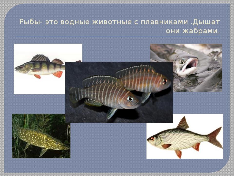 краситель для рыбы под копчение купить