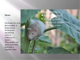 Мышь Особенность этой фотографии в композиции нескольких предметов: стебель