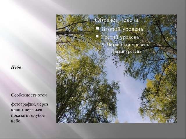 Небо Особенность этой фотографии, через кроны деревьев показать голубое небо.