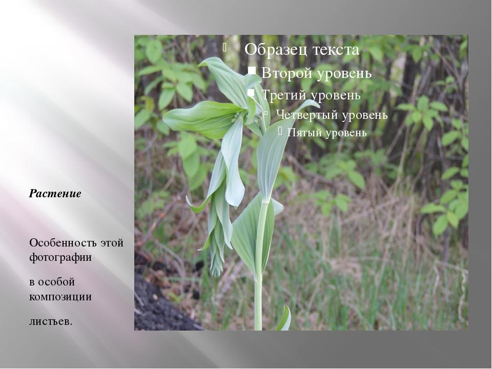 Растение Особенность этой фотографии в особой композиции листьев.