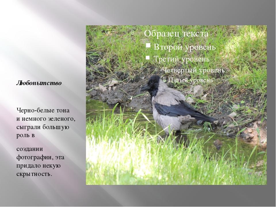 Любопытство Черно-белые тона и немного зеленого, сыграли большую роль в созд...