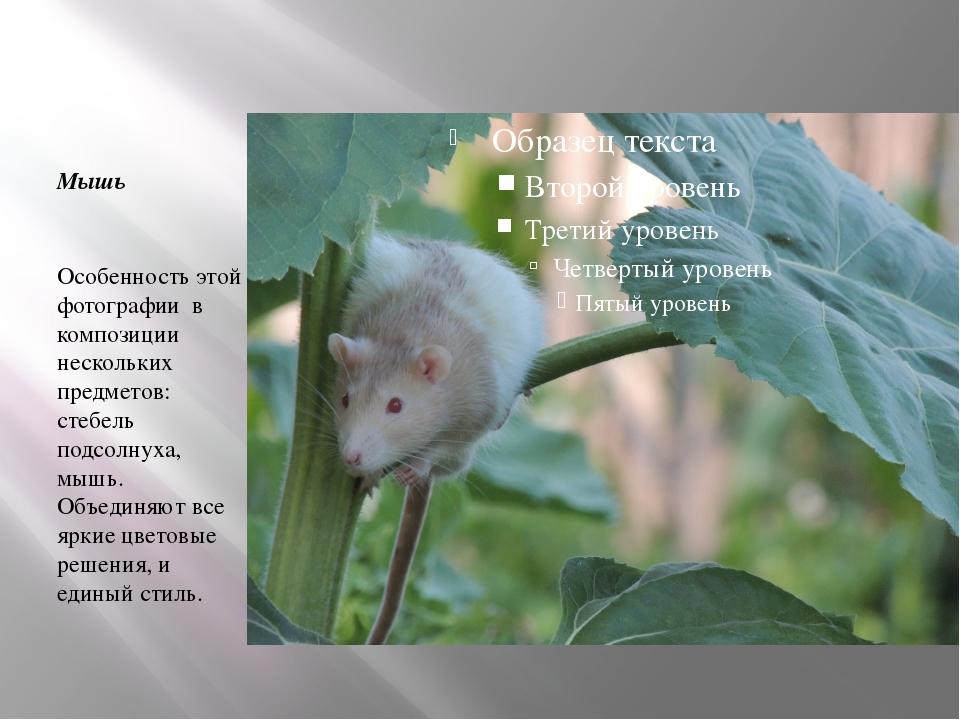 Мышь Особенность этой фотографии в композиции нескольких предметов: стебель...