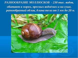 РАЗНООБРАЗИЕ МОЛЛЮСКОВ - 230 тыс. видов, обитают в морях, пресных водоёмах и