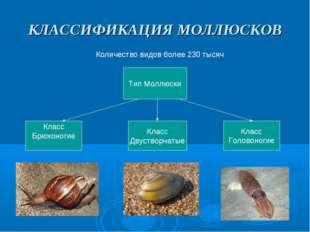 КЛАССИФИКАЦИЯ МОЛЛЮСКОВ Количество видов более 230 тысяч Тип Моллюски Класс Б