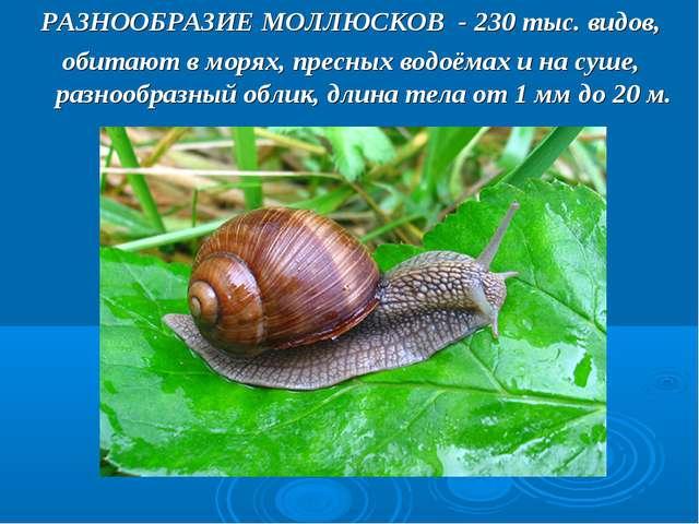 РАЗНООБРАЗИЕ МОЛЛЮСКОВ - 230 тыс. видов, обитают в морях, пресных водоёмах и...