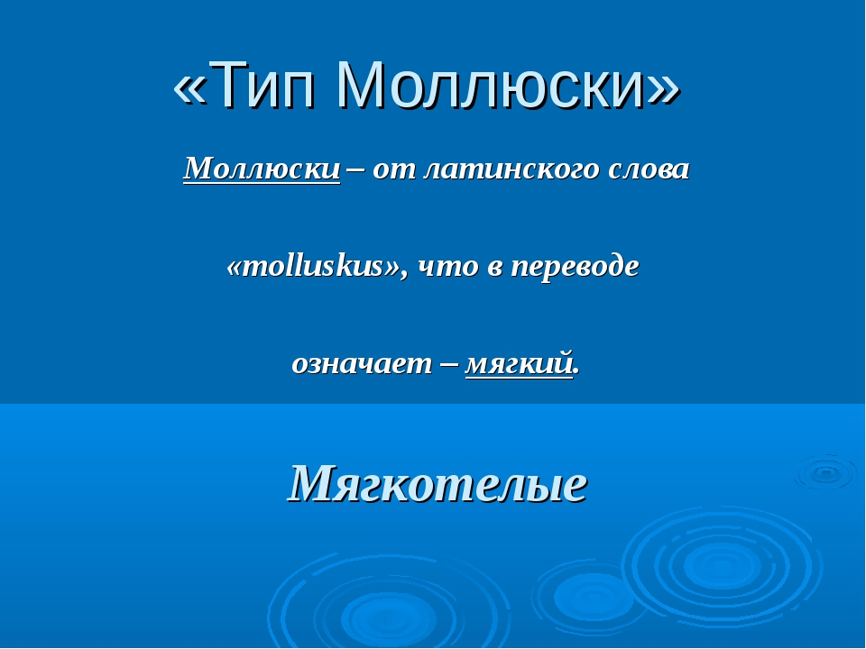 «Тип Моллюски» Моллюски – от латинского слова «molluskus», что в переводе озн...