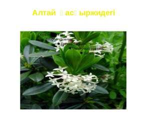 Алтай қасқыржидегі