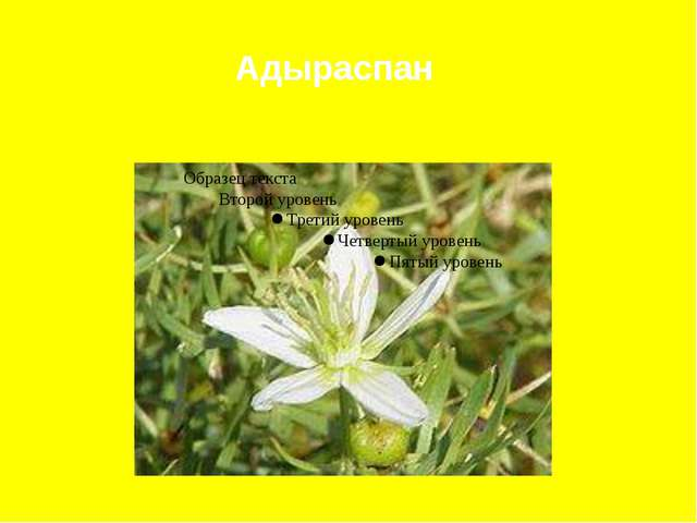 Адыраспан