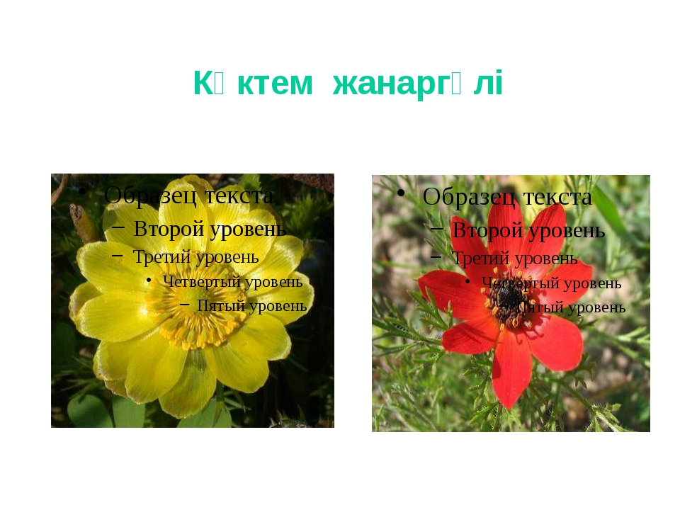 Көктем жанаргүлі
