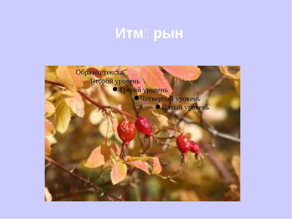 Итмұрын
