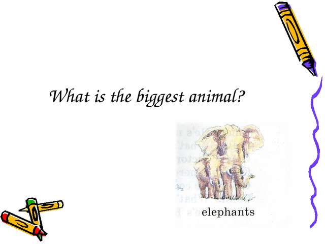 What is the biggest animal?