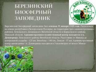 Березинский биосферный заповедник был основан 31 января 1925 года. Расположен