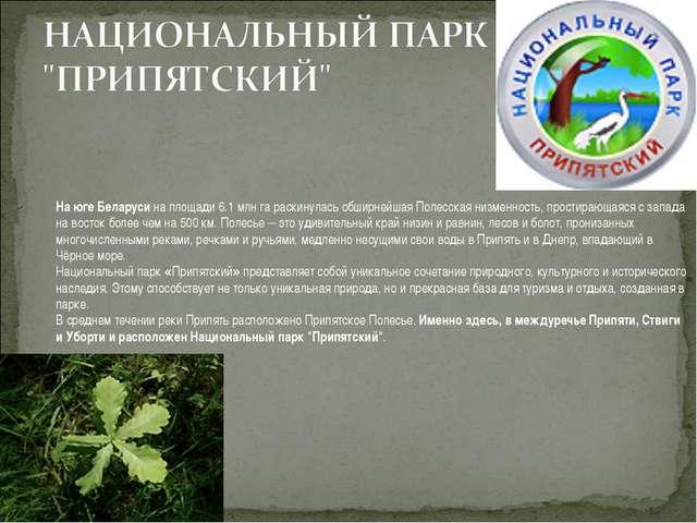 На юге Беларуси на площади 6.1 млн га раскинулась обширнейшая Полесская низме...