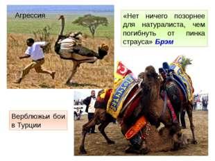 «Нет ничего позорнее для натуралиста, чем погибнуть от пинка страуса» Брэм Ве
