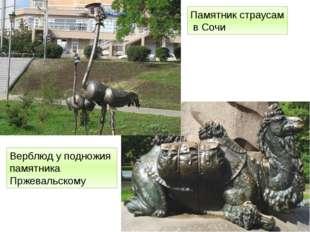 Памятник страусам в Сочи Верблюд у подножия памятника Пржевальскому http://fo