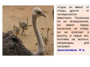 «Одно он имеет от птицы, другое - от четвероногого животного. Поскольку он не