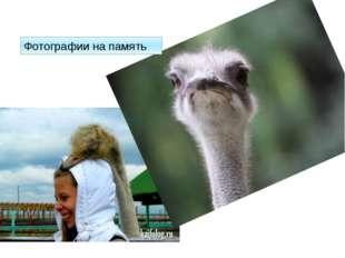 Фотографии на память http://kaifolog.ru/uploads/posts/2012-11/thumbs/13528842