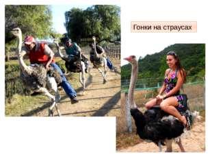Гонки на страусах http://www.adventime.ru/files/active/0/2429_large.jpg Девуш