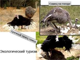 Брачный танец самца Самец на гнезде Экологический туризм http://img12.nnm.ru/