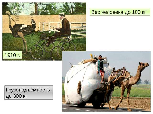 1910 г. Вес человека до 100 кг Грузоподъёмность до 300 кг http://www.fresher....