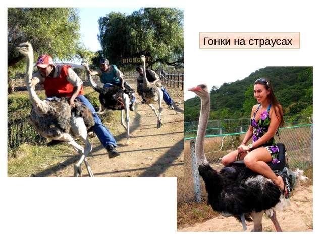 Гонки на страусах http://www.adventime.ru/files/active/0/2429_large.jpg Девуш...