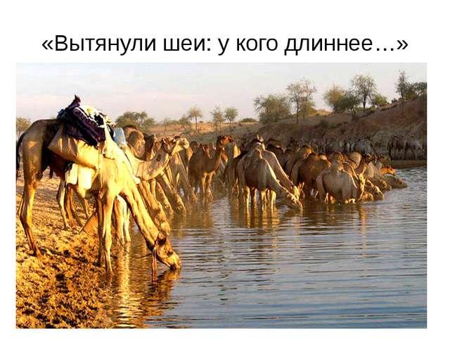 «Вытянули шеи: у кого длиннее…» http://kaifolog.ru/uploads/posts/2012-11/thum...