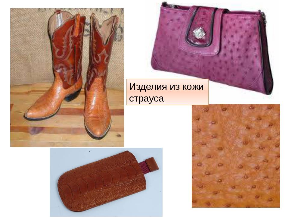 Изделия из кожи страуса http://t3.gstatic.com/images?q=tbn:ANd9GcSURH1ua-ffxt...