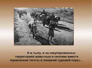 И в тылу, и на оккупированных территориях животные и человек вместе переноси