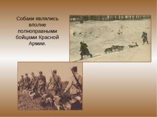 Собаки являлись вполне полноправными бойцами Красной Армии.