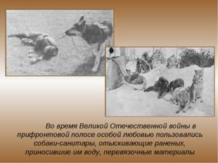 Во время Великой Отечественной войны в прифронтовой полосе особой любовью по