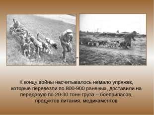 К концу войны насчитывалось немало упряжек, которые перевезли по 800-900 ране