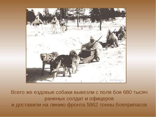 Всего же ездовые собаки вывезли с поля боя 680 тысяч раненых солдат и офице...