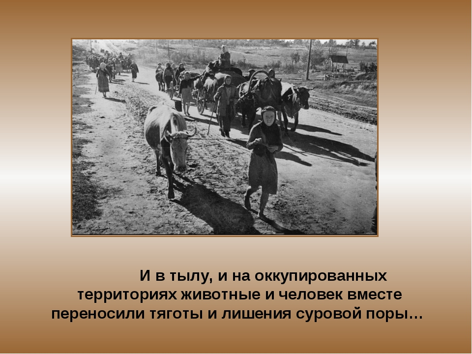 И в тылу, и на оккупированных территориях животные и человек вместе переноси...