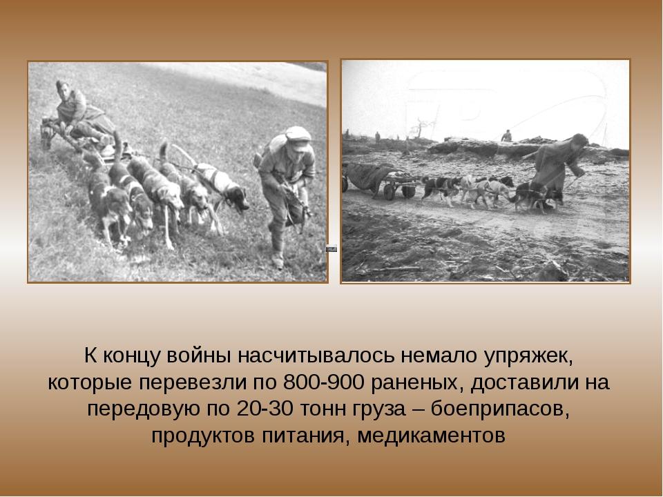 К концу войны насчитывалось немало упряжек, которые перевезли по 800-900 ране...