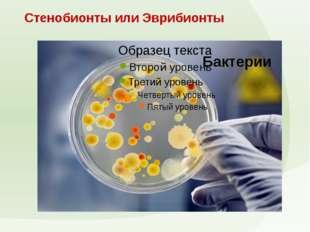 Стенобионты или Эврибионты Бактерии Стенобионты или Эврибионты