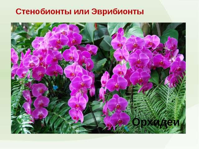 Стенобионты или Эврибионты Орхидеи