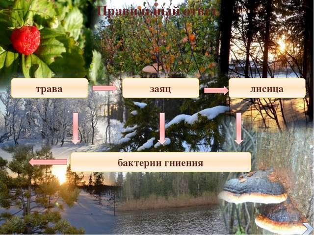http://img1.liveinternet.ru/images/attach/c/1/58/139/58139623_1272009446_poli...
