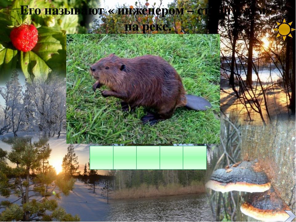 Установите соответствие: естественное сообщество – искусственное сообщество о...