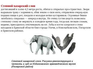 Степной хазарский слон достигавший в холке 4,5 метра роста, обитал в открытых