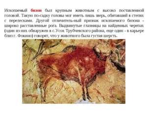 Ископаемый бизон был крупным животным с высоко поставленной головой. Такую по