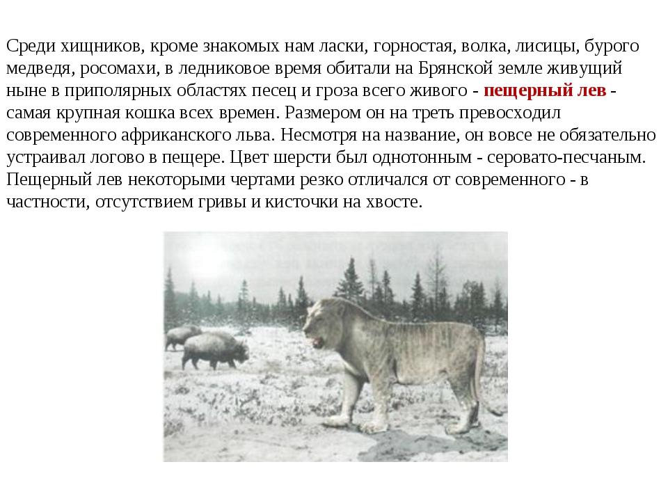 Среди хищников, кроме знакомых нам ласки, горностая, волка, лисицы, бурого ме...