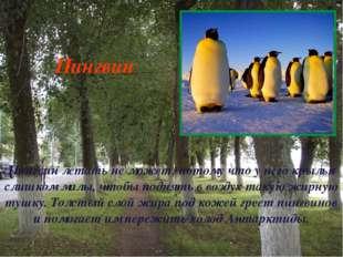Пингвин летать не может, потому что у него крылья слишком малы, чтобы поднять