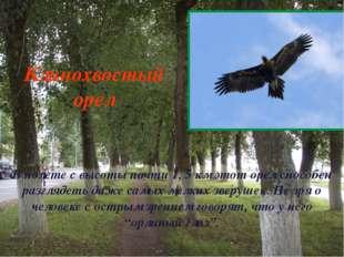 В полете с высоты почти 1, 5 км этот орел способен разглядеть даже самых мелк