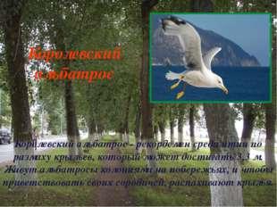Королевский альбатрос - рекордсмен среди птиц по размаху крыльев, который мож
