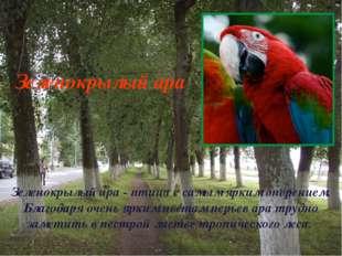Зеленокрылый ара - птица с самым ярким оперением. Благодаря очень ярким цвета