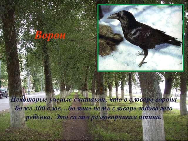 Некоторые ученые считают, что в словаре ворона более 300 слов…больше чем в сл...